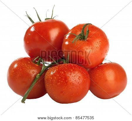 few red fresh wet tomatoes