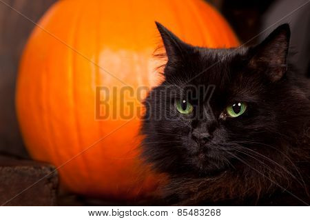 Black Cat By A Pumpkin
