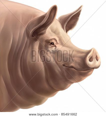 Illustration the head of pig, on a white background. Isolated object.