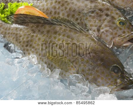 grouper fish on top of ice