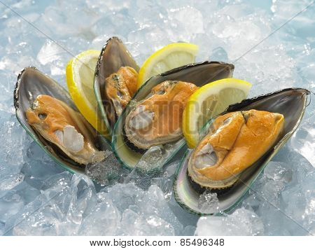 Fresh raw oysters on ice