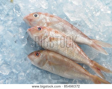 red snapper fish on top of ice