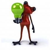 foto of amazonian frog  - Fun frog - JPG