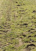 stock photo of track field  - horse vs tractor tracks on a field. ** Note: Soft Focus at 100%, best at smaller sizes - JPG