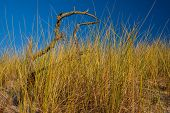 stock photo of dead plant  - Plants on dunes dead trees and straw growing on sands - JPG