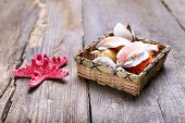 stock photo of snail-shell  - shells and starfish on a wooden table - JPG