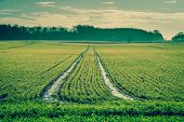 pic of track field  - Greencountryside landscape with field deep tire tracks - JPG
