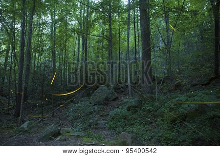 trails of fireflies in night time forest
