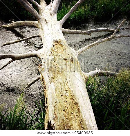 Fallen log across stream