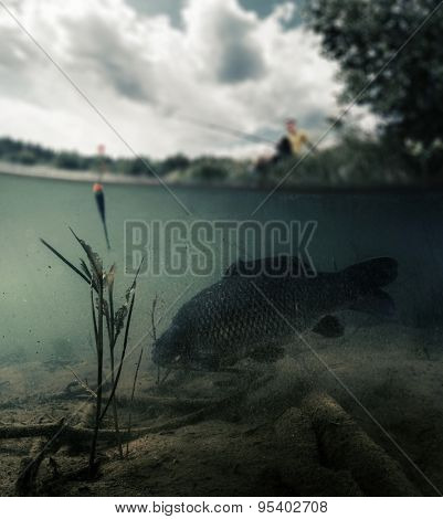Split shot of the freshwater pond with fisherman above the surface and big fish (Carp of the family of Cyprinidae) grazing underwater over the bottom. Blurred edges, focus only on the fish.