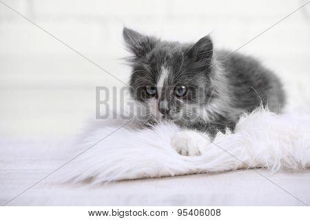 Cute gray kitten on carpet on floor at home