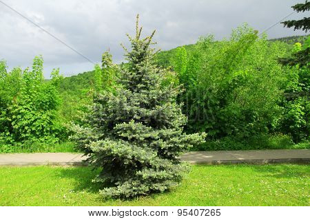 Green fir tree with other trees over blue sky background