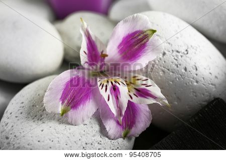 Spa still life with purple flowers and pebbles, closeup