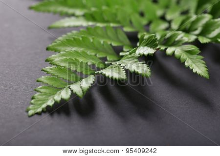 Green leaves on dark surface, closeup