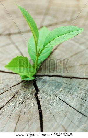 Plant growing through trunk of tree