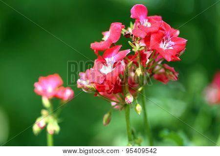Flowers in flowerpot outdoors