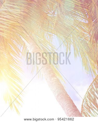 Summer vacation background, abstract natural backdrop, fresh palm tree leaves over blue sky in bright yellow sun light, travel to exotic country
