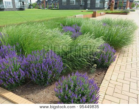 Grass And Lavender