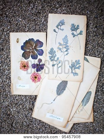 herbarium pages