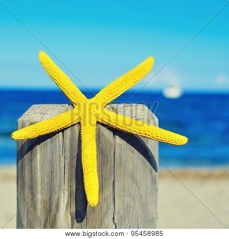 closeup of a yellow starfish on a wooden pole on the beach, with the sea and the horizon in the background