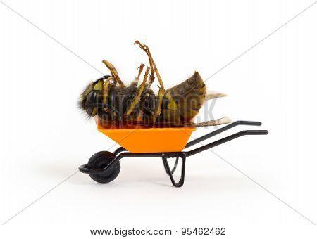 Dead Wasp In A Miniature Wheelbarrow