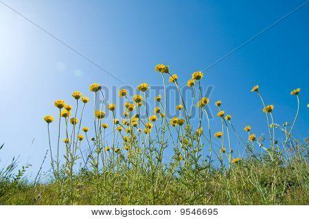 Flowers Under Sun