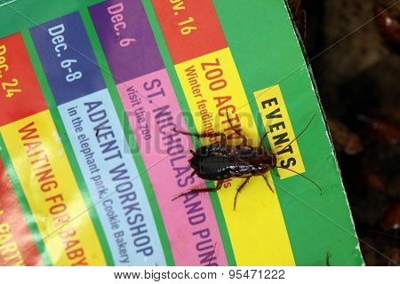 VIENNA, AUSTRIA - JUNE 7, 2015: Turkestan cockroach (Blatta lateralis) on a printed program of the Schonbrunn Zoo in Vienna, Austria.