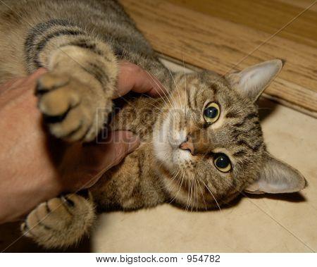 Kittin Cat Love