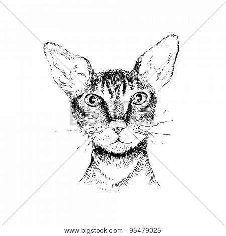 hand drawn cornish rex cat portrait