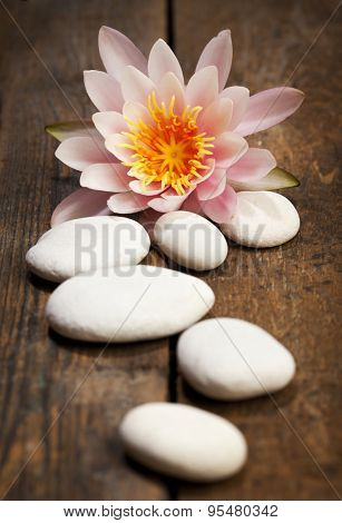 pink water lily behind pebbles on rustic wooden surface, selective focus
