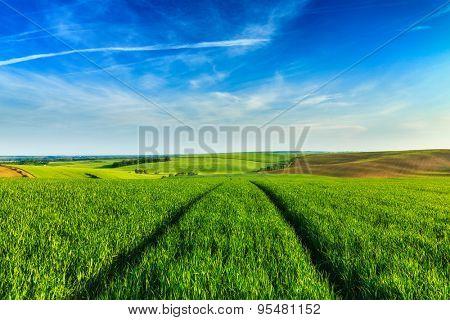 Green fields of Moravia with blue sky, Czech Republic