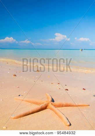 Sea Starlet Under the Sun