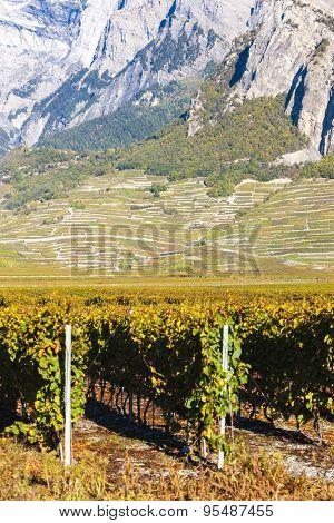 vineyards in Ardon region, canton Valais, Switzerland