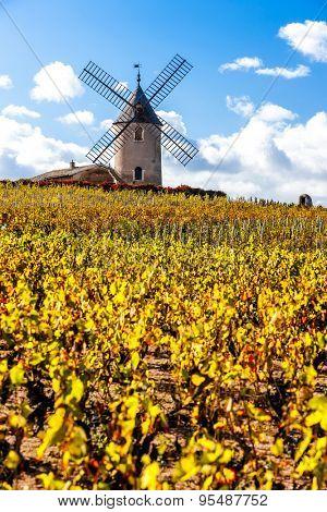 vineyard with windmill near Chenas, Beaujolais, Rhone-Alpes, France