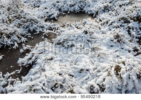 Snow And Ice In A Nature Area From Close