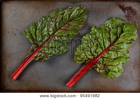 Two stalks of red chard on a metal baking sheet. High angle view in horizontal format.
