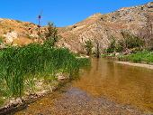stock photo of tallgrass  - Tallgrass surrounding a Mojave desert creek at Deep Creek near Hesperia - JPG