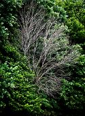 foto of decomposition  - One dead tree in green forest  - JPG