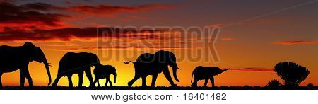 Elephants silhouettes in night savanna
