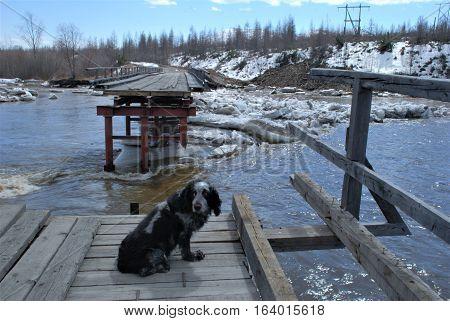 Destroyed bridge. Destroyed bridge stands on the River. Large flow, the flood destroyed the bridge ..