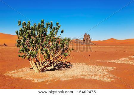 Single tree in Sahara Desert, Algeria