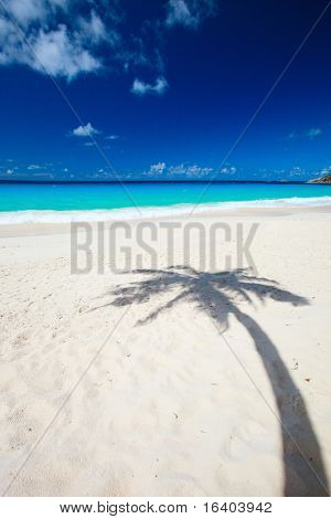 Palm tree shadow on tropical white sand beach
