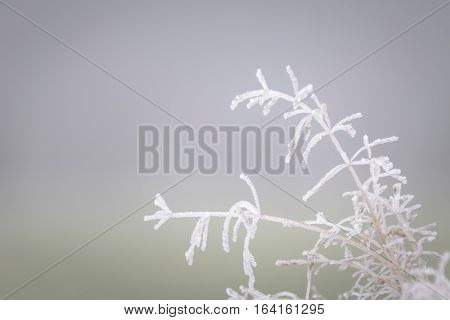 Beautiful hoar frost on grass totally covered with ice in misty landscape