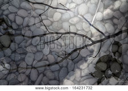branches silhouette. Top of tree with round pebble stones behind - Leaves black silhouettes and pebble stones