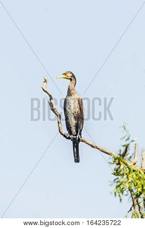 Egretta Bird Standing On A Tree Branch, Outdoor Portrait