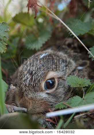 Baby hare hiding from the world in his cache