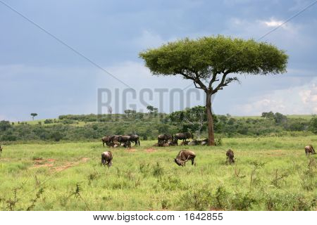 African Landscape With Wildebeest