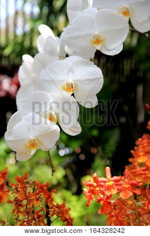 Gorgeous image of exotic orchids and other flowers in pretty landscaped garden.