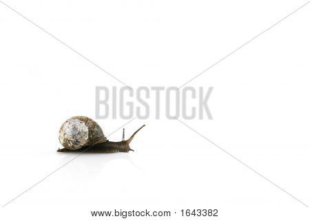 Blanc Snail-Road