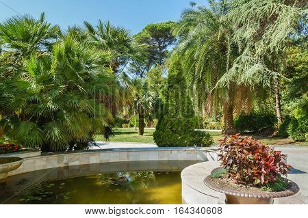 Palm trees around the pond in a subtropical urban Park